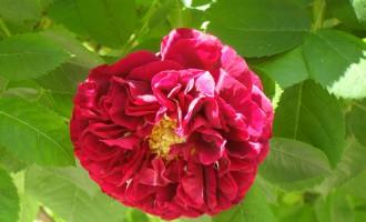 SDC17071-Geschwind-zahrada-maj-jun-2010-foto-M.-Lukac.jpg